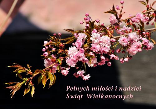 Zdrowych i radosnych Świąt Wiekanocnych ... mokrego dyngusa :)