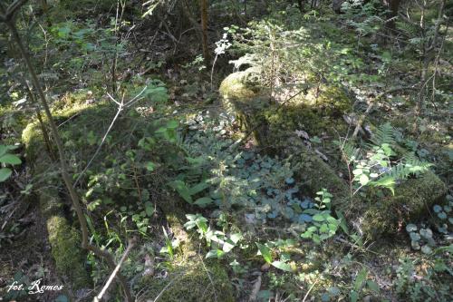 Kowalewskie - nieczynny cmentarz ewangelicki
