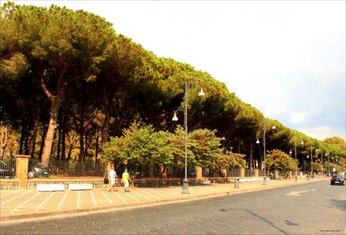 Pompeje - ulica współczesnego miasta. Piękne sosny piniowe.