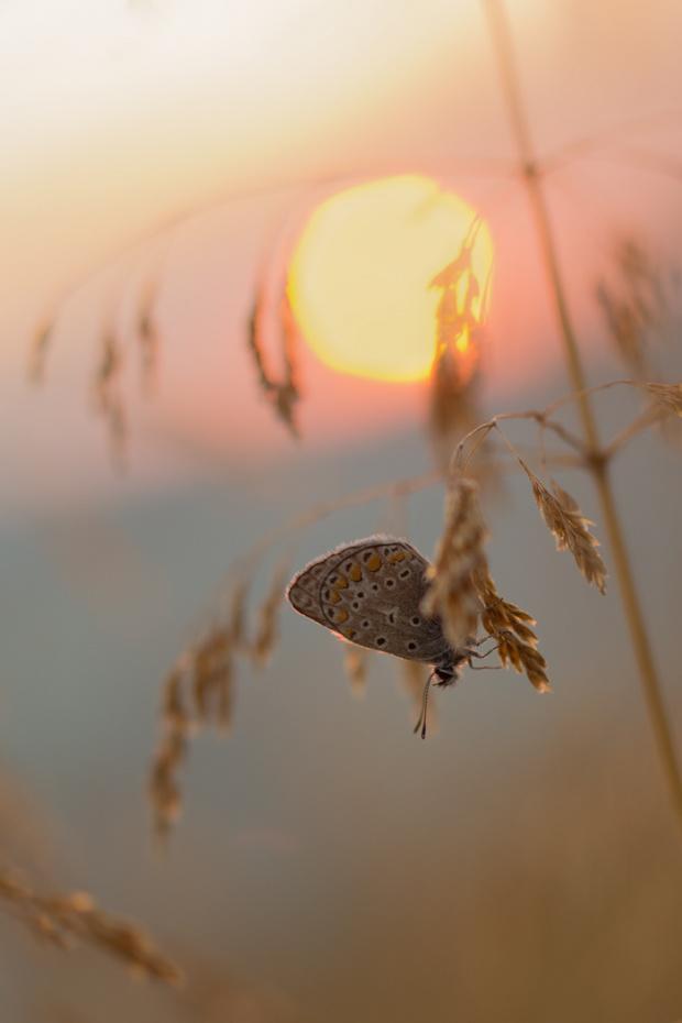 Gdy słońce idzie spać