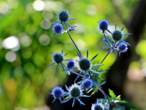 letnie wspomnienie z ogródka ... **** ulub. darkadi1 ****