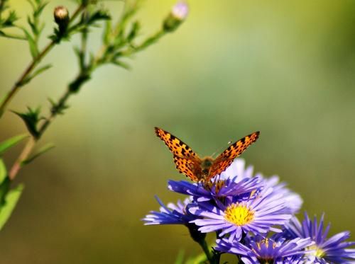 Jesień w moim ogrodzie :) **** ulub. margraf ****