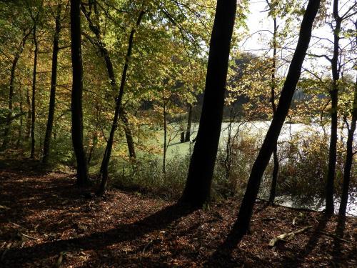 W moim magicznym lesie ;)
