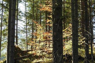 Kolory jesieni pod Tatrami