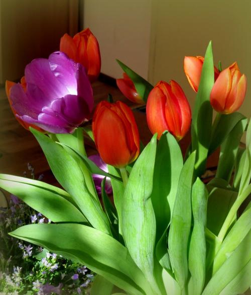 Wiosna z marketu..