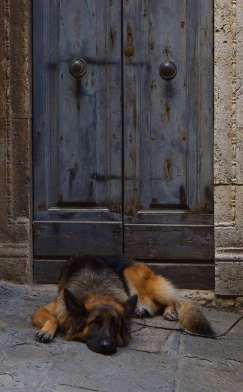 Strażnik