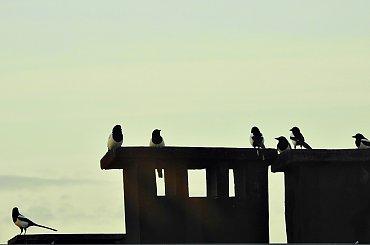 srocze rozmowy przy kominie :)