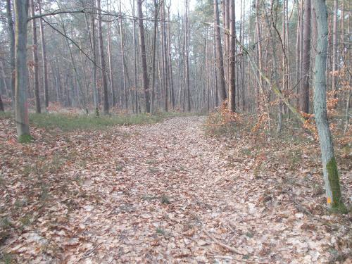 Tutaj powstanie ścieżka rowerowa na odcinku Sztutowo-Kąty Rybackie