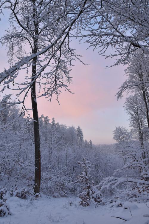 Leśny pastel o zachodzie słońca