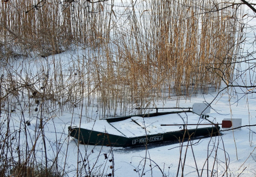 Zimowa Dębowa ...