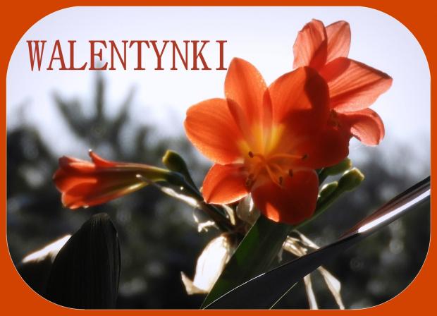 Dla Wszystkich Zakochanych w Dniu Ich Święta. A niezakochanym życzę zakochania z wzajemnością !