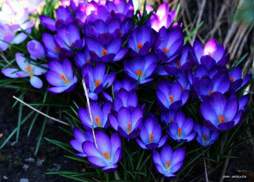 Tak szybko ta wiosna ucieka, że nie nadąży się wszystkiego pokazać ...
