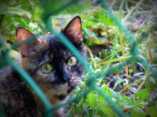 Jeden z bezdomnych kotków, które dokarmiam.