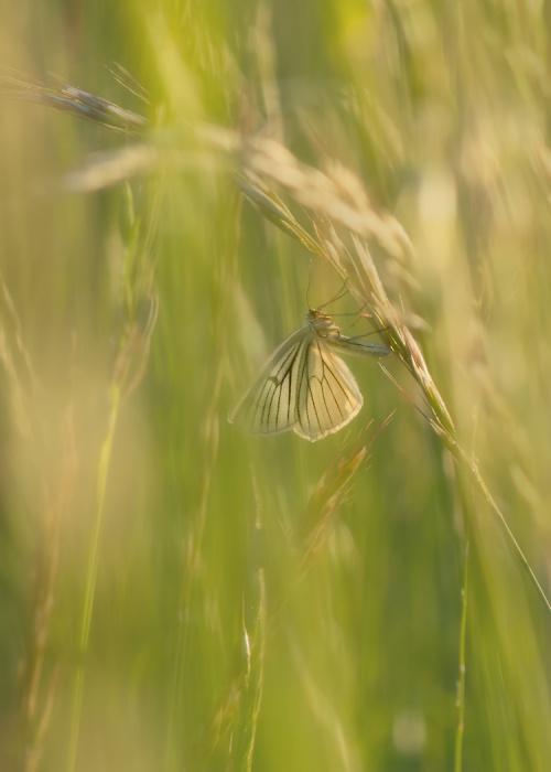 Gdzieś w trawie