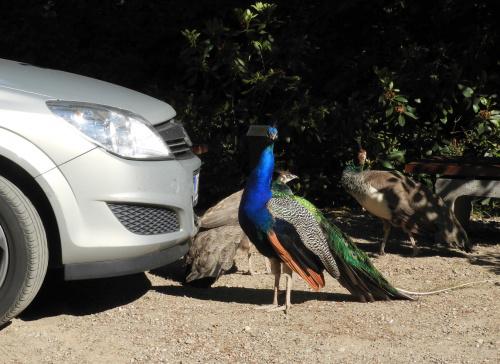 Komitet powitalny na parkingu.