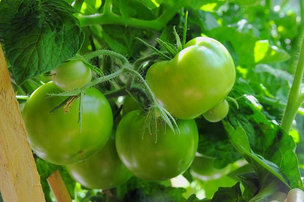 Lime Garden Salad