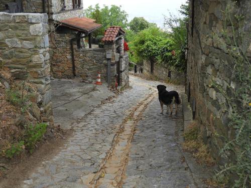 Ten pies był naszym przewodnikiem po starej górskiej wiosce.