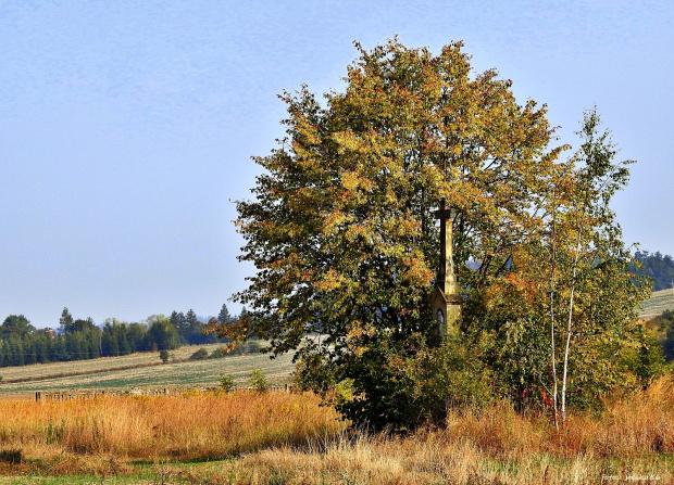 W polu, daleko od drogi ... na mojej ukochanej wsi :)