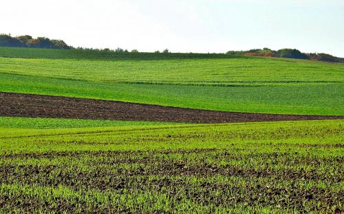 Czarnocin – wieś w pobliżu sanktuarium Góra Świętej Anny
