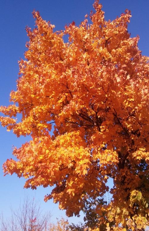 Ostatnio tylko komórką zdjęcia pstrykam, ale nie mogę przejść obojętnie obok takiego drzewa.. Pozdrawiam wszystkich Fotosikowiczów !