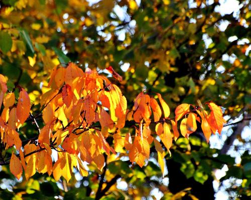 Jesienna, kolorowa Chomiąża ...