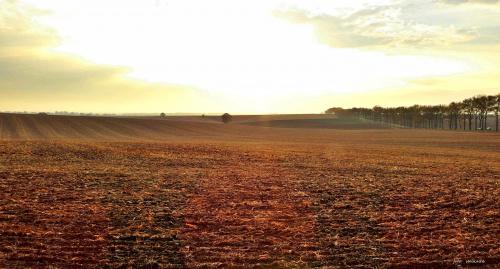 Jesienne pola (to tutaj niedawno rosła i kwitła gorczyca - jako poplon), już zaorane, w okolicy Ucieszkowa gm. Pawłowiczki ...