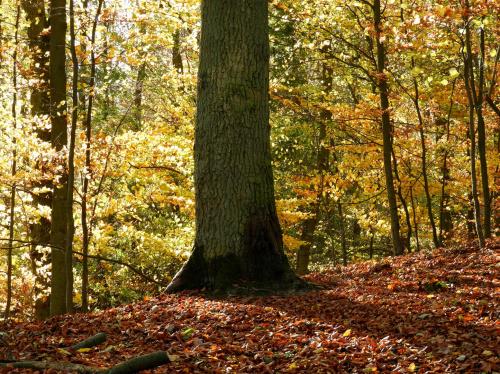 """"""" W moim magicznym lesie wszystko się zdarzyć może; same zmyślają się historie, sam się rozgryza orzech """"..."""