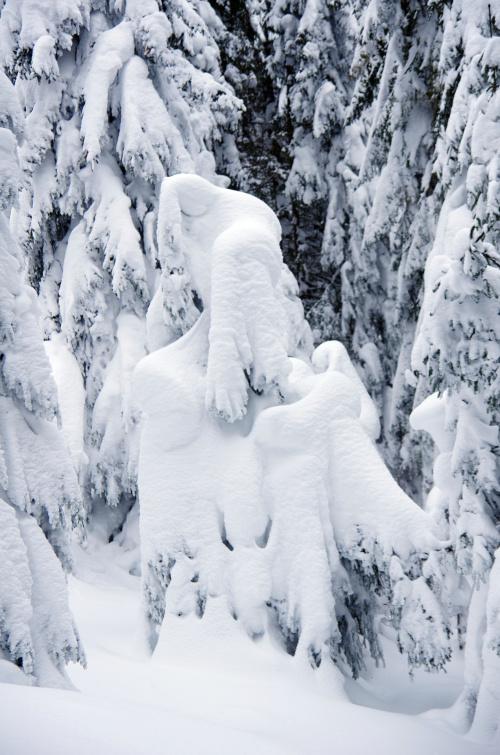 Królowa śniegu ;)