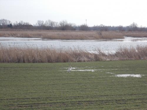 Trasa widokowa nad Nogatem na odcinku Jazowa-Kępki.