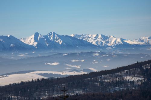 Widok na Tatry z Jaworzyny Krynickiej