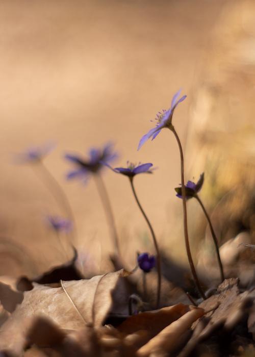 Dopóki w lesie fioletowo:)