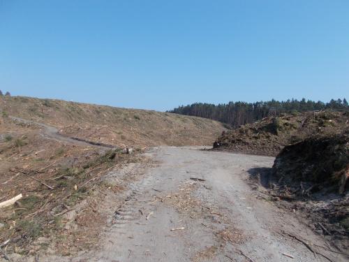 Ścieżka rowerowa wzdłuż Mierzei Wiślanej. Odcinek Kąty Rybackie-Krynica Morska. Na obszarze przekopu.