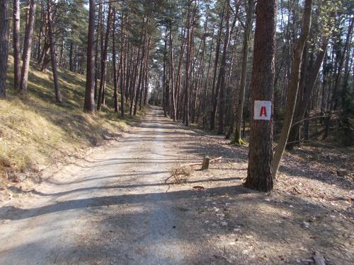 Ścieżka rowerowa wzdłuż Mierzei Wiślanej. Odcinek Kąty Rybackie-Krynica Morska. Droga pożarowa ,,A''.