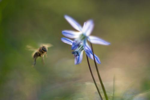 Pszczółkowo-cebulicowe maziaje :)