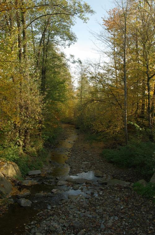 rzeka Krzyworzeka :)