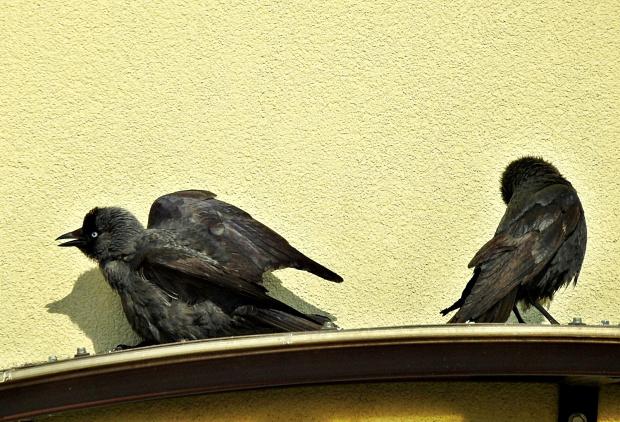 Balkonowe obserwacje w czasie pandemii koronawirusa ...