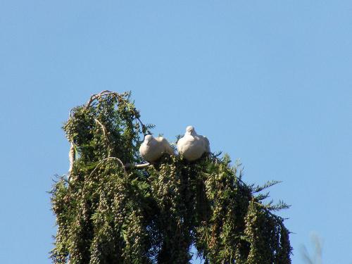 Podkówki dwie, w tym jedna sobie słodko drzemie... na drzewie :-)