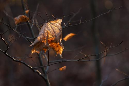 Na razie zima jest taka...jesienna :)