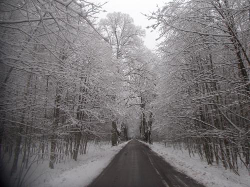 Piękna sceneria w lasach przed Olsztynkiem