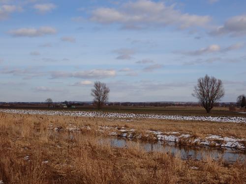 Węzina-panorama Żuław znad rzeki Wąskiej. Na horyzoncie rośnie farma wiatrowa w okolicach Krasina