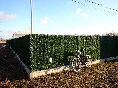Płot trawą zarośnięty w Ząbrowie :-)