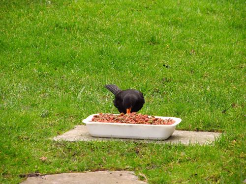 Lunch time, jednakże gdyby ktoś zastanawiał się co to za jedzenie to dodam... to jest sucha karma dla kotów. Made in France