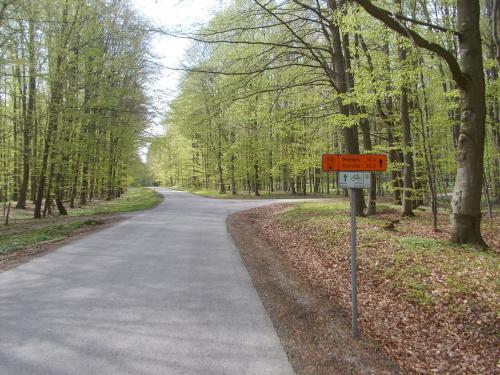 Do pochylni Buczyniec w prawo, znaki szlaków Krainy Kanału Elbląskiego chwilowo trzeba zignorować.